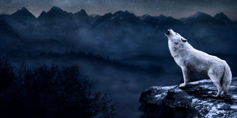 Mattepainting, el lobo y luna